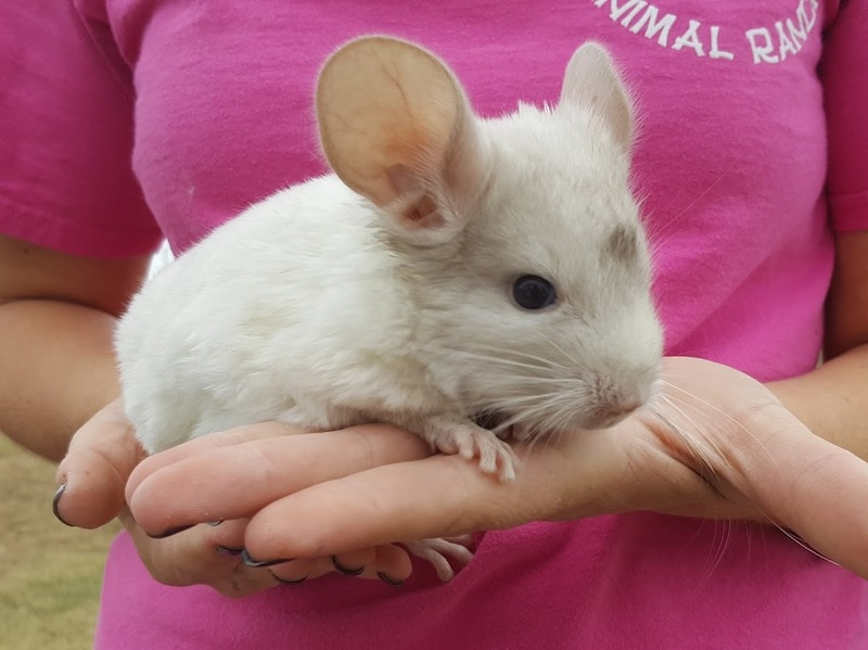 Janda Exotics Animal Ranch Exotic Pets And Animal Encounters Kingsbury